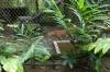 Caged Puma, Zoológica El Arca EC