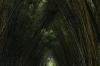Bamboo path, Zoológica El Arca EC