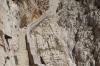 Escala del Cabirol (steps) to Grotta di Nettuno, Capo Caccia