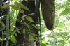 Termite nest. Jaraqui Stream jungle hike, Amazon BR