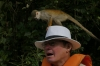Squirrel Monkeys. Ariaú River off the Rio Negro BR