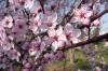 Hussein Park on family Friday - Spring blossom, Amman JO