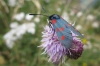 Flowers and bug at La Massana, Andorra