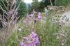 Elisse and flowers at La Massana, Andorra