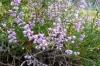 Flowers at La Massana, Andorra