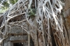 Ta Prohm Temple - overcome by the jungle
