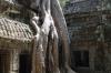 Ta Prohm Temple - overcome by the jungle
