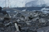Penguins at Jougla Point on Wiencke Island, Palmer Archipelago, Antarctica