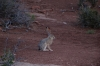 Jack Rabbit. Arches National Park, North & South Windows