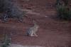 Jack Rabbit. Arches National Park, North & South Windows