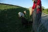 Denis feeds his goat friends. A walk through Arnex-sur-Orbe CH