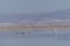 Chaxa Lake in the National Flamingo Reserve, Atacam Desert CL