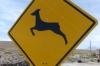 A Vicuña road sign in Socaire Village (3300m), Atacama Desert CL