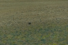 Rhea (South American Ostrich) near Socaire Village, Atacama Desert CL