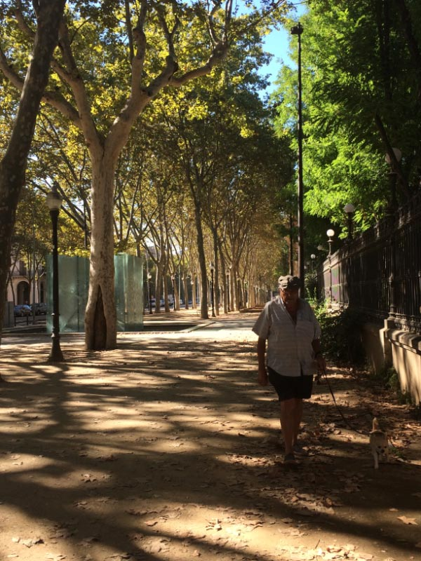 Trees on Passeig de Picasso