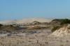 Sand dunes, Eucla WA