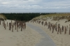 Nagliy Nature Reserve (the Dead Dunes), Curonian Spit LT