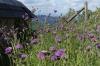 Wild flowers on Calvery, Banská Štiavanica SK
