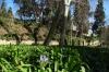 Lone flower. Romantic Garden of the Parc del Laberint