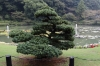 Umi-Jigoku hot springs, Beppu, Japan