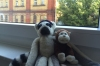 Pepe and Paco 'at home' in Berlin DE