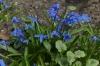 Spring flowers in the Tiergarten, Berlin DE