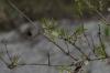 Bumblebee - first sign of Spring in the Tiergarten, Berlin DE