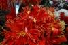 Flowers, Osh Market, Bishkek