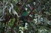 A bad shot of a Quetzal? Cascada Escondida (Waterfall Trail)