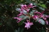 Pinkish flowers. Cascada Escondida (Waterfall Trail)