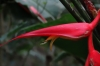Stunning red flower. Cascada Escondida (Waterfall Trail)