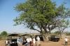 Coffee Break, Chobe National Park, Botswana