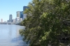 Brisbane on a Bike - Mangroves on the Brisbane River QLD