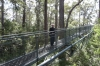 Valley of the Giants - Tree Top Walk