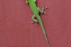 Green lizard, Workshop of Martha Jimenez Perez, Plaza del Carmen, Camaguey