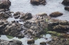 Seal colony at Cape Naturaliste