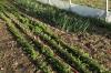 Dylan's organic farm in Orbe CH