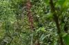 Bromelaid flower. Cascade El Chorro (waterfall) EC