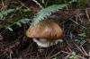 Mushroom. A walk around Laguna da Busa (lake) EC