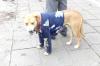 Dog dressed up at Santuario Mariano, Cuenca EC