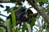 Cuba's national bird, colours match the flag, El Nicho CU