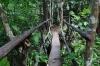 Forest path at El Nicho CU