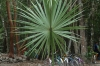 Palm starts life with a single frond. Ancient Ruins of Coba
