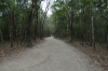 Sacbeob (ancient road) in the Ancient Ruins of Coba