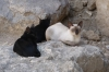 A cat's life at the Templo Romano, Córdoba