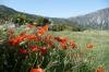 Kera, south of Hersonissou, Crete GR