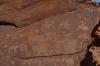Rock Art (pertoglyphs) at Twyfelfontein, Namibia