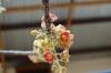 Flowers and seed pod. Rustig Toko Lodge, Namibia