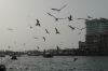 Seagulls on the Dubai Creek
