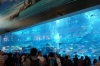 Aquarium at the Dubai Mall
